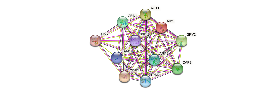AIP1 protein (Saccharomyces cerevisiae) - STRING interaction network