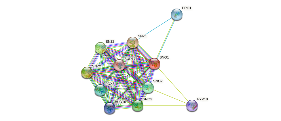 SNO1 protein (Saccharomyces cerevisiae) - STRING interaction network