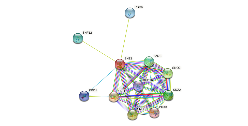 SNZ1 protein (Saccharomyces cerevisiae) - STRING interaction network