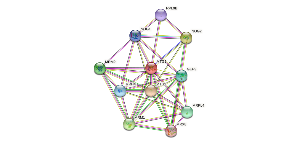 MTG1 protein (Saccharomyces cerevisiae) - STRING interaction network