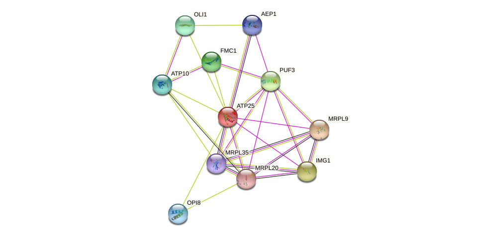 ATP25 protein (Saccharomyces cerevisiae) - STRING interaction network