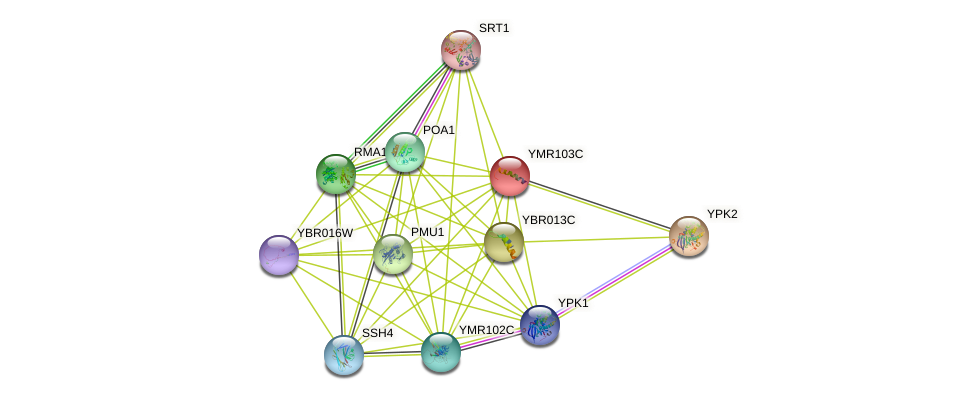 YMR103C protein (Saccharomyces cerevisiae) - STRING interaction network
