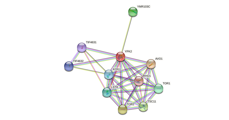 YPK2 protein (Saccharomyces cerevisiae) - STRING interaction network