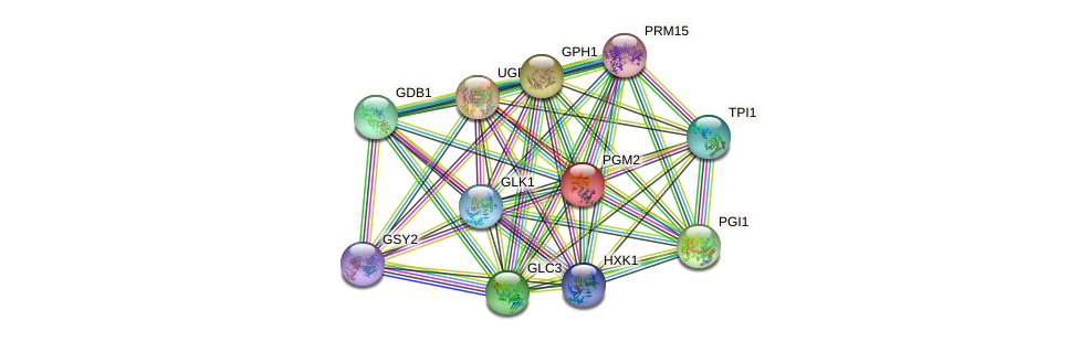 PGM2 protein (Saccharomyces cerevisiae) - STRING interaction network