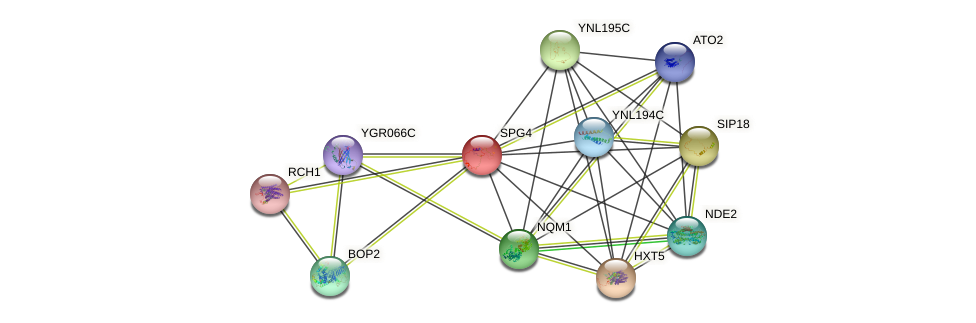 SPG4 protein (Saccharomyces cerevisiae) - STRING interaction network