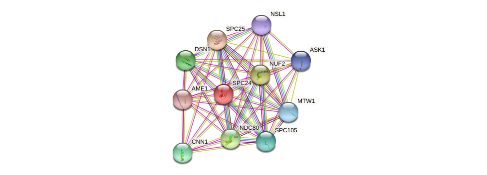 SPC24 protein (Saccharomyces cerevisiae) - STRING interaction network