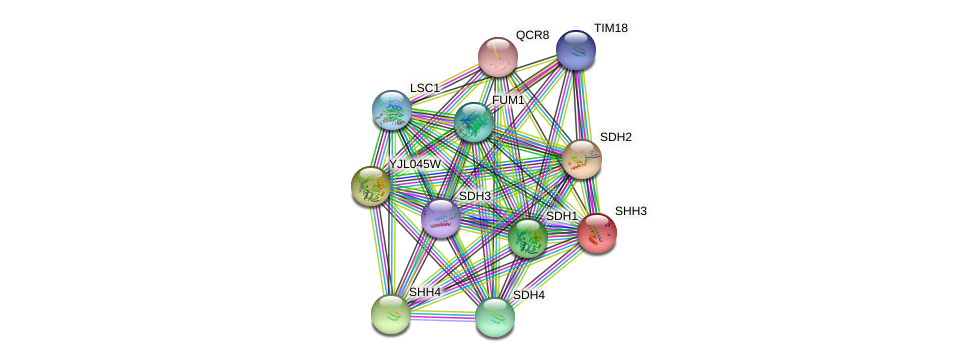 SHH3 protein (Saccharomyces cerevisiae) - STRING interaction network