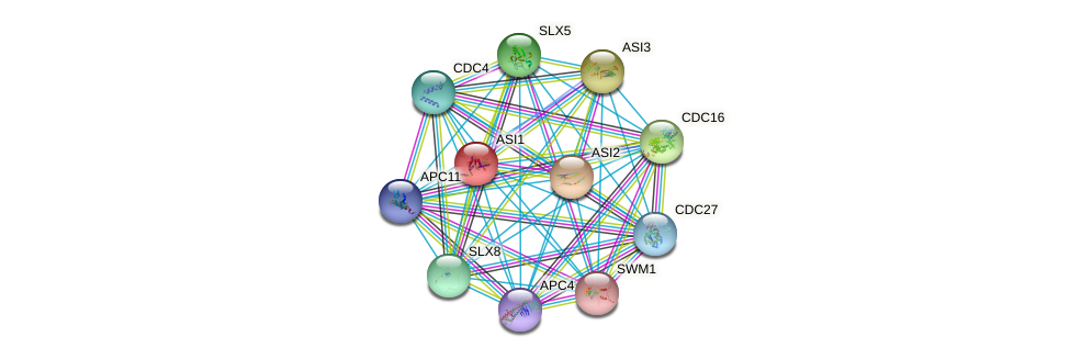 ASI1 protein (Saccharomyces cerevisiae) - STRING interaction network