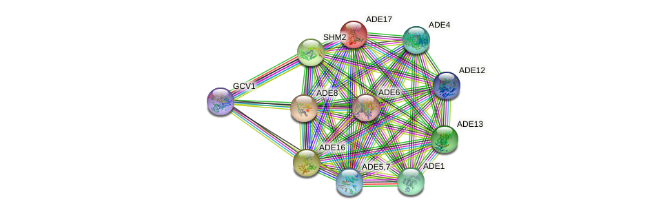 ADE17 protein (Saccharomyces cerevisiae) - STRING interaction network