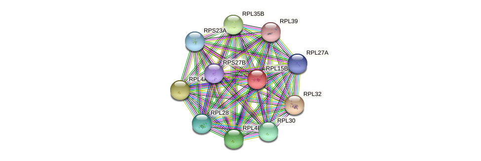 RPL15B protein (Saccharomyces cerevisiae) - STRING interaction network