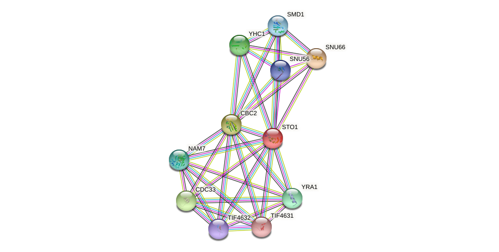 STO1 protein (Saccharomyces cerevisiae) - STRING interaction network