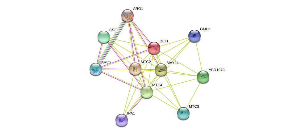 DLT1 protein (Saccharomyces cerevisiae) - STRING interaction network