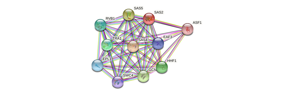 SAS2 protein (Saccharomyces cerevisiae) - STRING interaction network