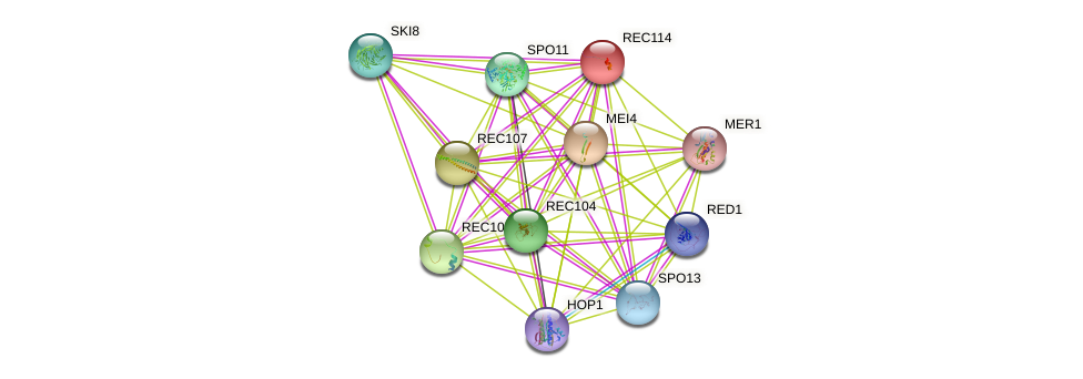 REC114 protein (Saccharomyces cerevisiae) - STRING interaction network