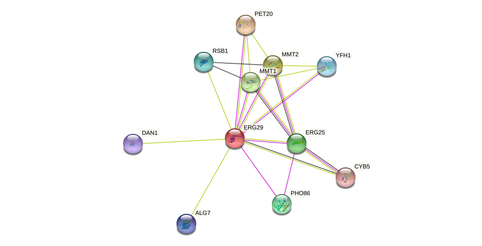 ERG29 protein (Saccharomyces cerevisiae) - STRING interaction network