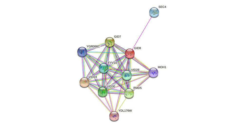 GID8 protein (Saccharomyces cerevisiae) - STRING interaction network
