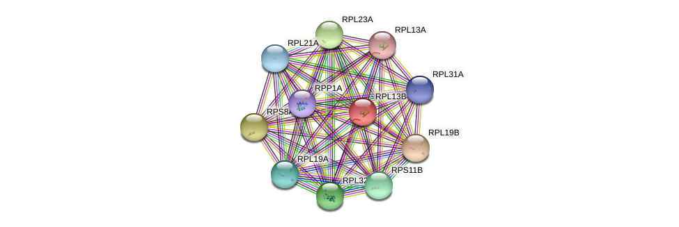 RPL13B protein (Saccharomyces cerevisiae) - STRING interaction network
