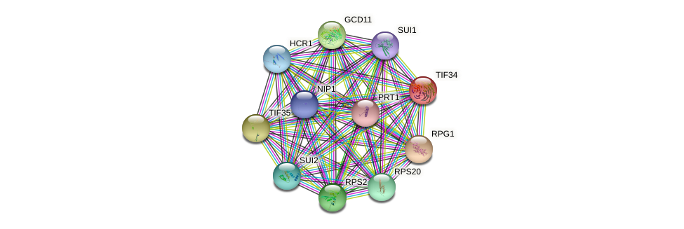 TIF34 protein (Saccharomyces cerevisiae) - STRING interaction network
