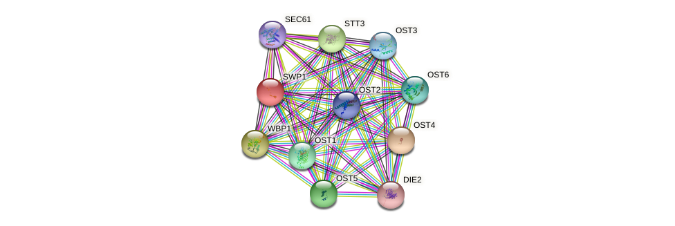 SWP1 protein (Saccharomyces cerevisiae) - STRING interaction network