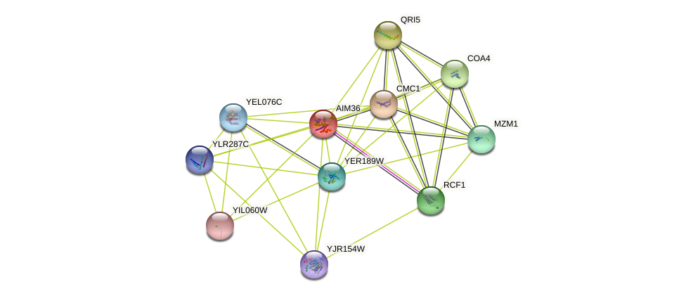 AIM36 protein (Saccharomyces cerevisiae) - STRING interaction network