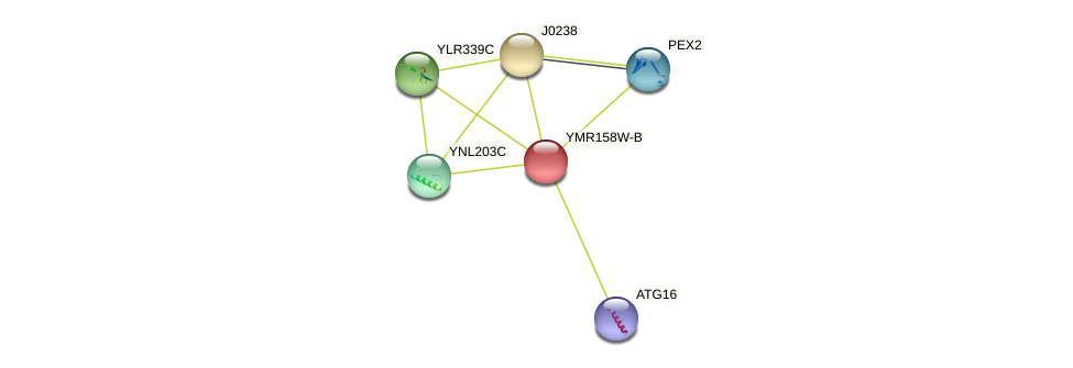 YMR158W-B protein (Saccharomyces cerevisiae) - STRING interaction network