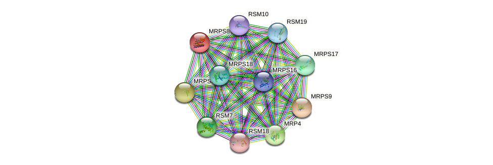 MRPS8 protein (Saccharomyces cerevisiae) - STRING interaction network