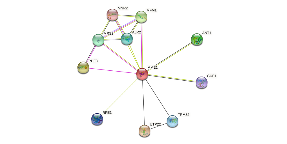 MME1 protein (Saccharomyces cerevisiae) - STRING interaction network