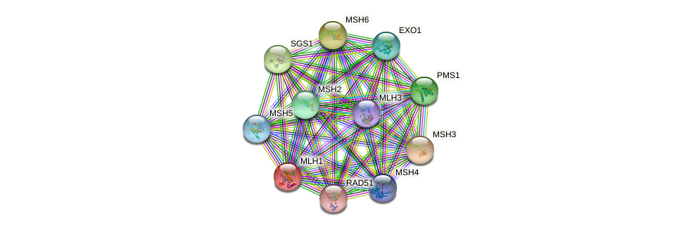 MLH1 protein (Saccharomyces cerevisiae) - STRING interaction network