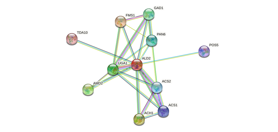 ALD2 protein (Saccharomyces cerevisiae) - STRING interaction network
