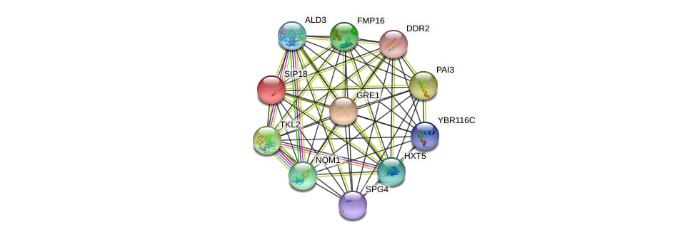 SIP18 protein (Saccharomyces cerevisiae) - STRING interaction network