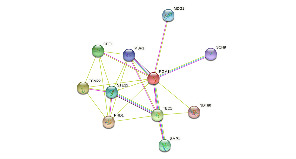 RGM1 protein (Saccharomyces cerevisiae) - STRING interaction network