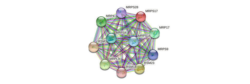 MRPS17 protein (Saccharomyces cerevisiae) - STRING interaction network