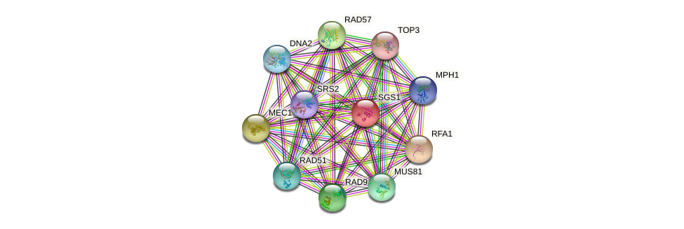 SGS1 protein (Saccharomyces cerevisiae) - STRING interaction network