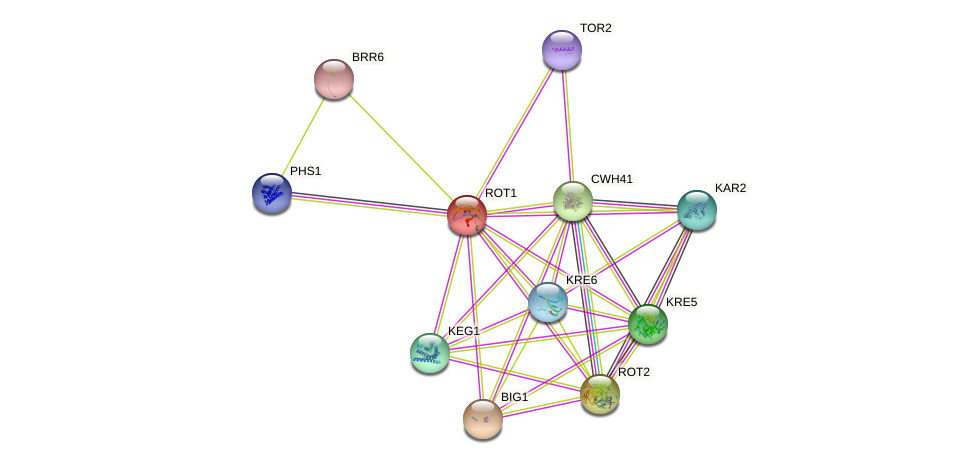 ROT1 protein (Saccharomyces cerevisiae) - STRING interaction network