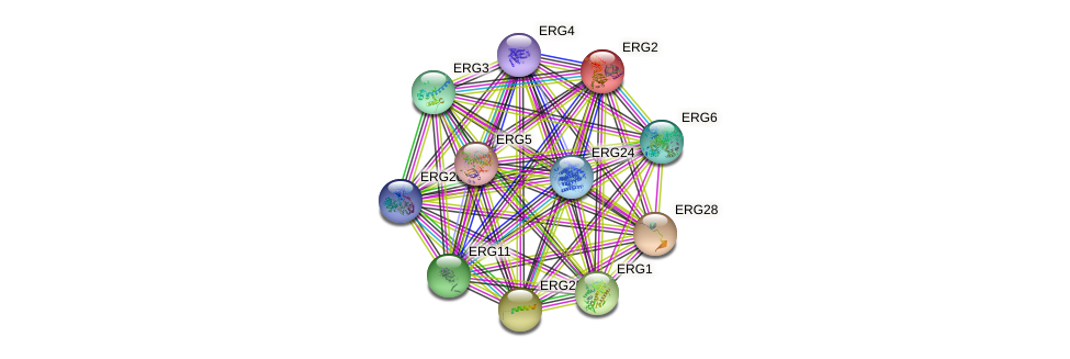 ERG2 protein (Saccharomyces cerevisiae) - STRING interaction network