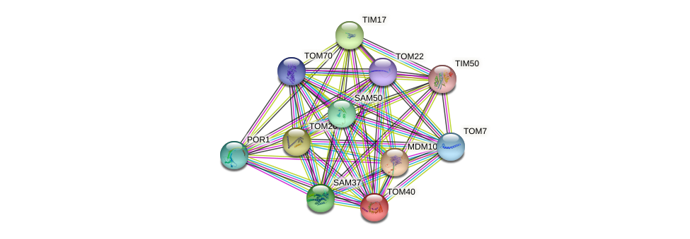TOM40 protein (Saccharomyces cerevisiae) - STRING interaction network