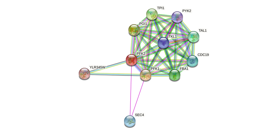 PFK2 protein (Saccharomyces cerevisiae) - STRING interaction network