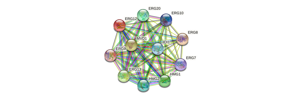 ERG12 protein (Saccharomyces cerevisiae) - STRING interaction network