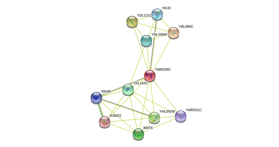 YMR209C protein (Saccharomyces cerevisiae) - STRING interaction network