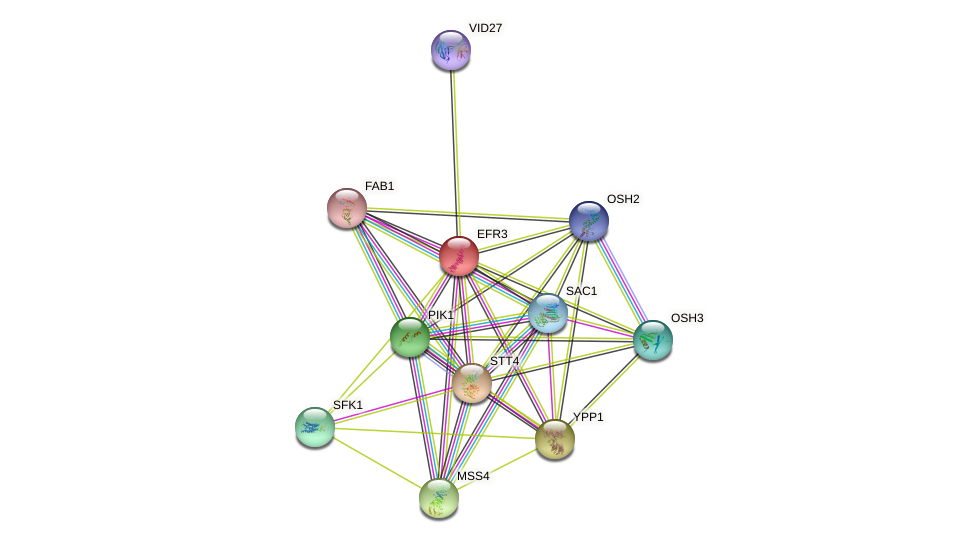 EFR3 protein (Saccharomyces cerevisiae) - STRING interaction network