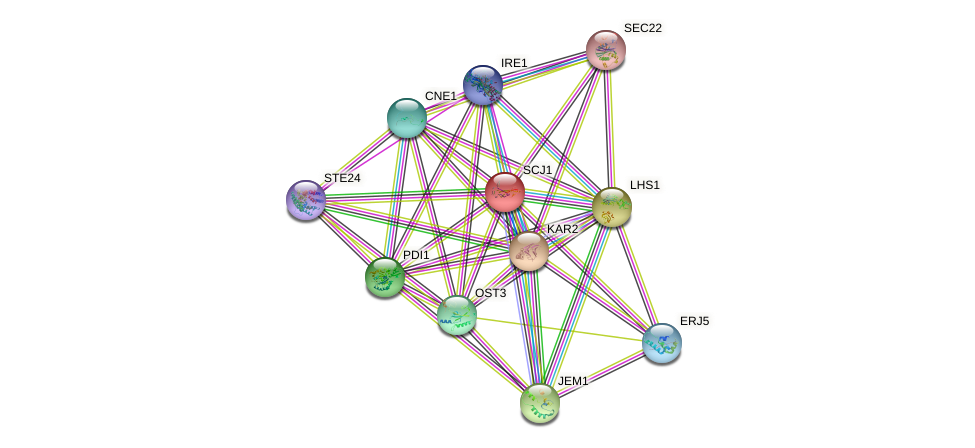 SCJ1 protein (Saccharomyces cerevisiae) - STRING interaction network