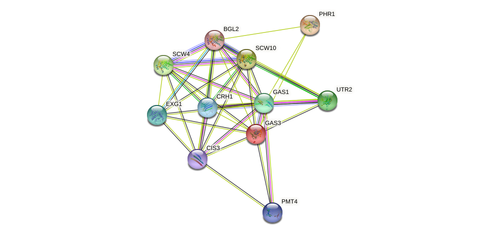 GAS3 protein (Saccharomyces cerevisiae) - STRING interaction network