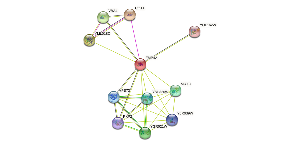 YMR221C protein (Saccharomyces cerevisiae) - STRING interaction network