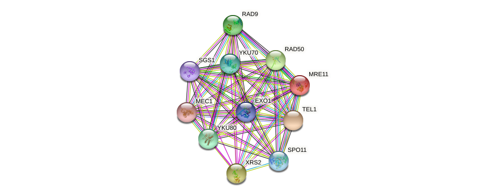 MRE11 protein (Saccharomyces cerevisiae) - STRING interaction network