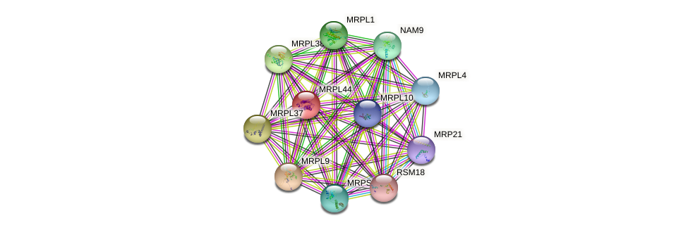 MRPL44 protein (Saccharomyces cerevisiae) - STRING interaction network