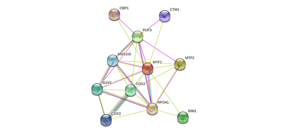 MTF1 protein (Saccharomyces cerevisiae) - STRING interaction network