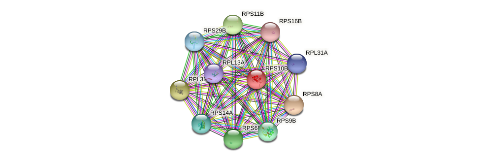 RPS10B protein (Saccharomyces cerevisiae) - STRING interaction network
