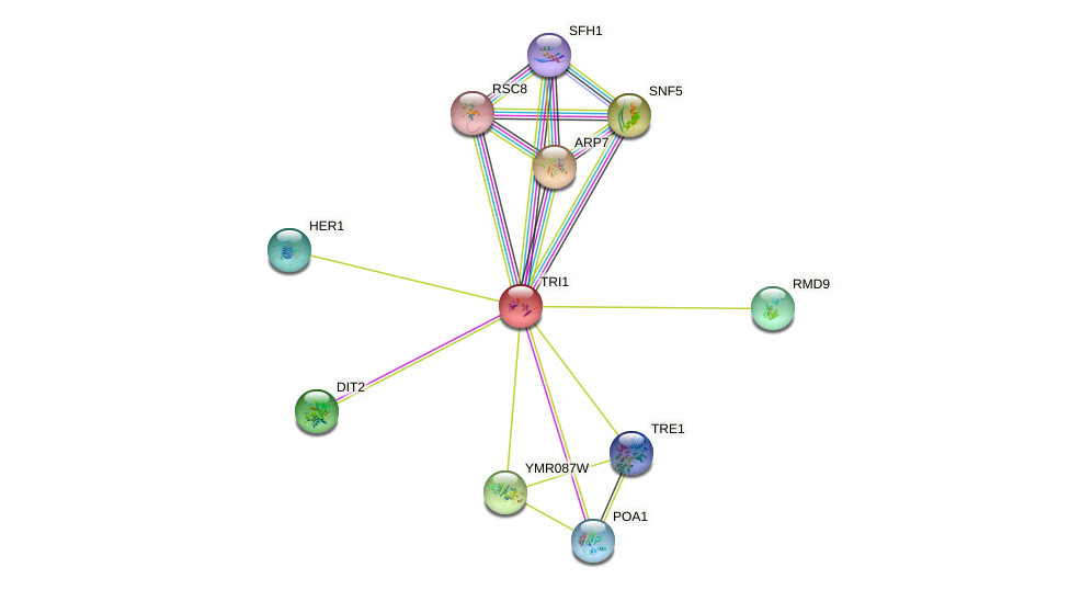 TRI1 protein (Saccharomyces cerevisiae) - STRING interaction network