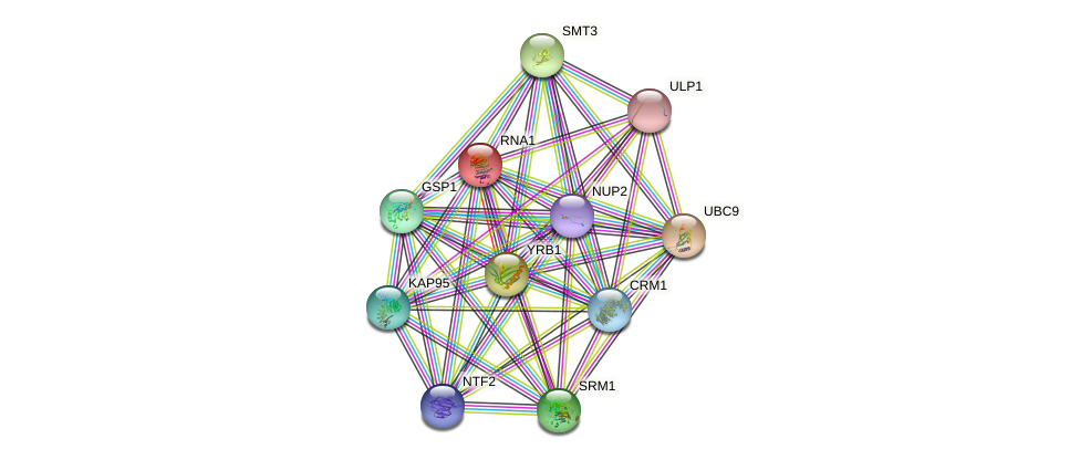 RNA1 protein (Saccharomyces cerevisiae) - STRING interaction network