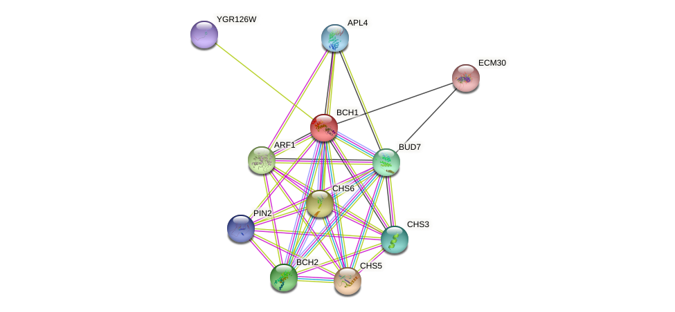 BCH1 protein (Saccharomyces cerevisiae) - STRING interaction network